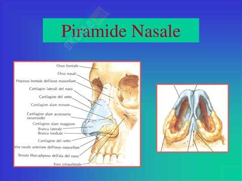 dispense fisiologia otorinolaringoiatria anatomia e fisiologia naso e