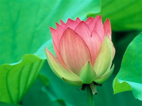 Green And Pink | pink with green pink color photo 16957829 fanpop