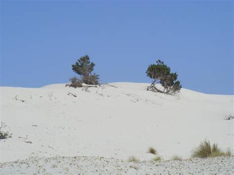 porto pino tripadvisor le dune picture of porto pino sant arresi