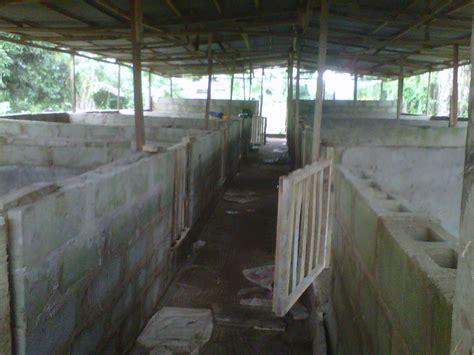 pig farm house design design and construction of piggery pens in nigeria no1 pig fan