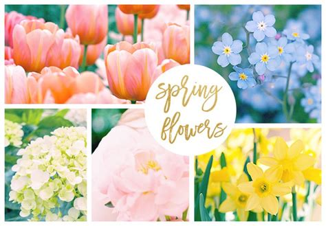 Home Decorating Channel by 42 Spring Flowers Inspired By Pantone Colors Of The Year