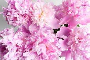 Pictures Of Pink Flowers - flowers pink color photo 31590890 fanpop