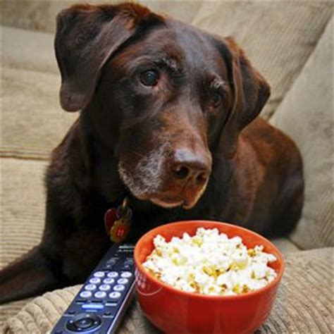 popcorn before bed can dogs eat popcorn is popcorn bad for dogs to eat
