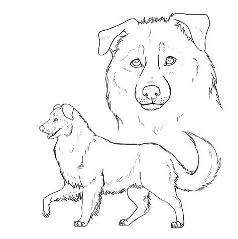 australian shepherd drawing coloring pages