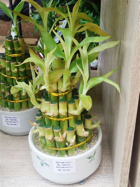 aneka model liukan batang bambu rejeki bebejacom