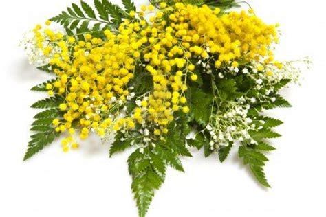 fiori festa delle donne 8 marzo 2013 festa delle donne a palermo feste e sagre