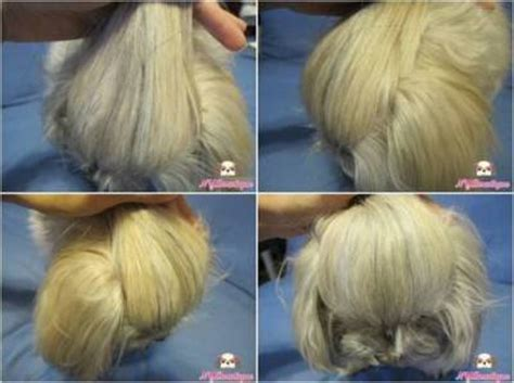 shih tzu bows shih tzu topknots and bows how to with photos