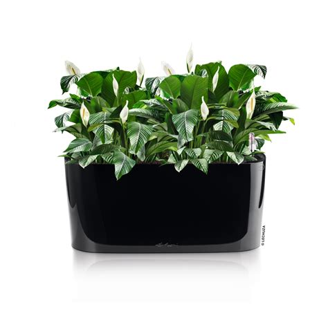 Lechuza Planters Australia by Container Connectiondelta 20