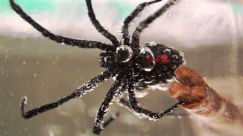 flies in basement 100 large flies in basement why fruit flies invade