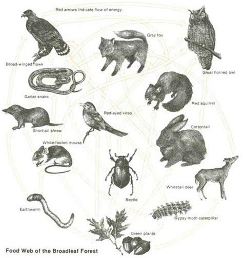 appalachian prey books p2 p3 m2 btec biology 10