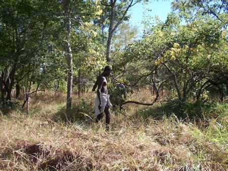 el bosque de morogoro 1535402865 forestales piden estimular el cultivo de 225 rboles comerciales en 193 frica con financiamiento