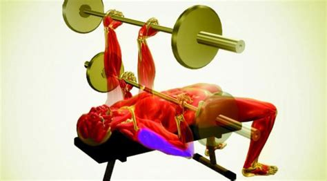 josh bryant bench press 6 simple moves to build a bigger chest muscle fitness