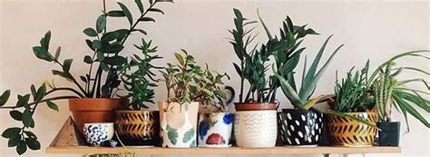 best plants for apartment air quality 60 best indoor plants decor ideas for apartment and home