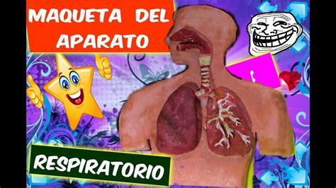 youtobe videos cmo nacer maqueta sistema respiratorio como hacer la maqueta del aparato respiratorio how to
