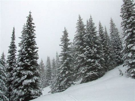 snow covered pine trees favorite things pinterest