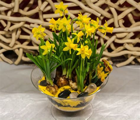 piante bulbose da fiore composizione di bulbose fiorista il seme como consegna