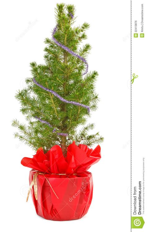 small decorative christmas trees photograph small christma
