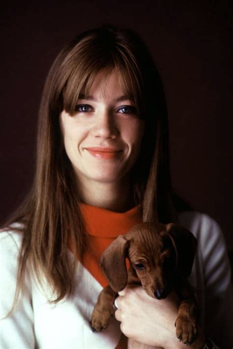 françoise hardy you re my home 11898 best images about doxies on pinterest