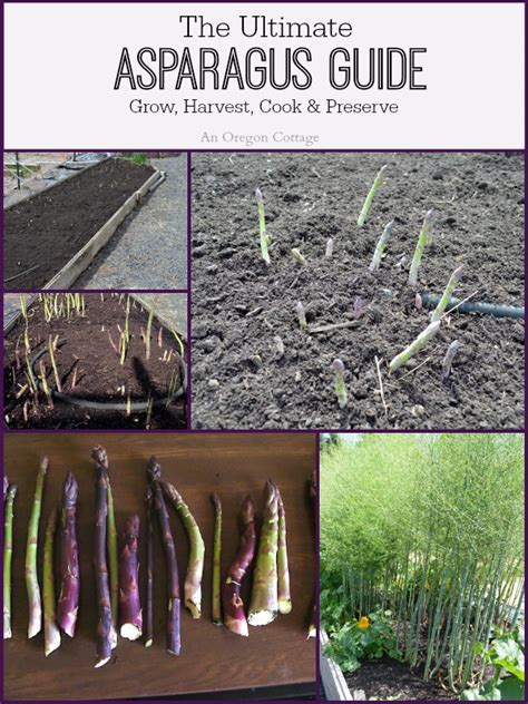 The Cottage Guide by Ultimate Asparagus Guide Grow Harvest Cook Preserve