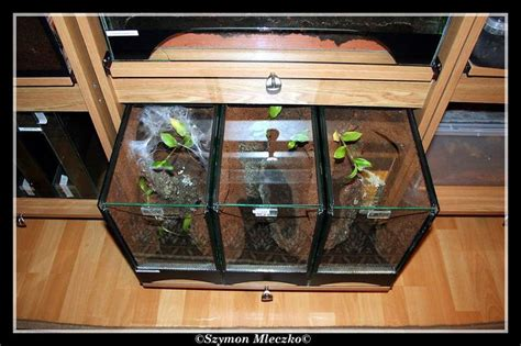 hair enclosures 114 best images about tarantulas on pinterest terrarium