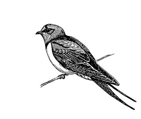 clipart illustrations avalez oiseau illustration clipart photo stock libre