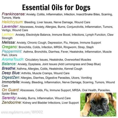 essential oils for dogs 301 moved permanently