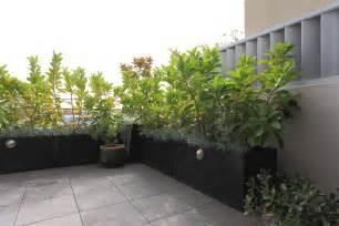 sichtschutz terrasse pflanzen sichtschutz mit pflanzen balkon sichtschutz aus pflanzen