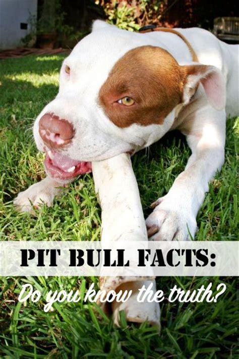 pitbull facts the world s catalog of ideas
