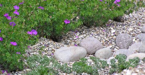Kiesgarten Beispiele kiesgarten anlegen und gestalten mein sch 246 ner garten