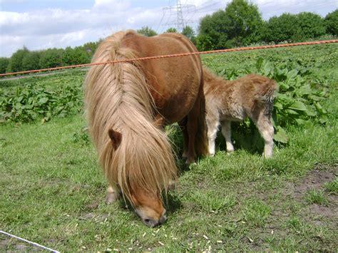 mini pony file mini pony and foal jpg