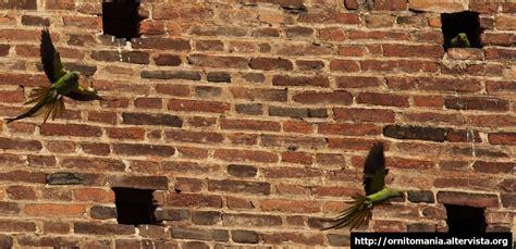 gabbie per parrocchetti dal collare pappagalli archivi ornitomaniaornitomania