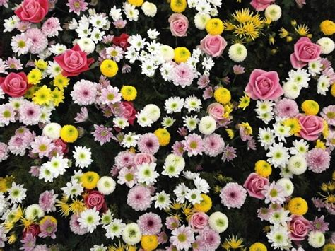 Flowers texture flower carpet Free stock photos in JPEG