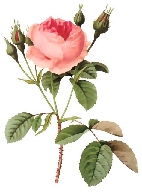 imagenes vintage flores flores ilustraciones en png para artesan 237 a y dise 241 os primavera