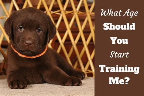 when should you start a puppy when to start a puppy what age can you begin