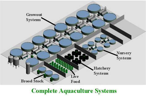 tilapia hatchery layout recirculating aquaculture systems process aquatics