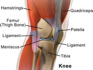 Interior Knee Ligament Miami Broward Slip Trip Fall Amp Other Accident Settlements