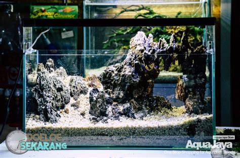 membuat aquascape cara membuat aquascape step by step aquajaya