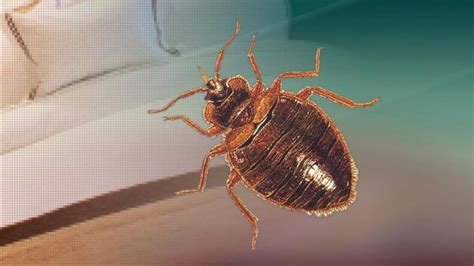 bed bug company another bed bug found at metlife in oriskany company