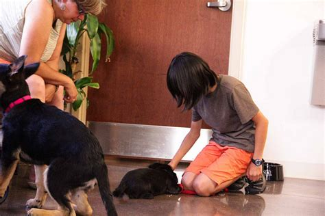 puppy not to bite 5 best tips for a puppy not to bite suggested post