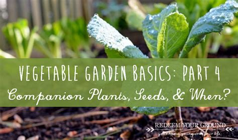 vegetable garden basics vegetable garden basics part 4 more what s and some