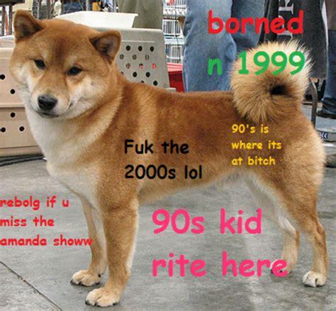 Shiba Meme - shiba inu puppy memes
