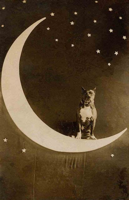 moon and pit antique photos pit bull and you to on
