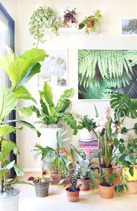best decorative house plants 18 most beautiful indoor plants 5 easy care tips