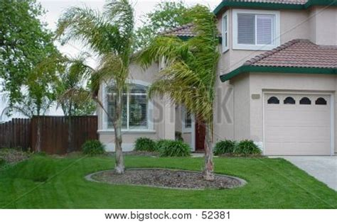 palm trees in front yard front yard palm trees quotes
