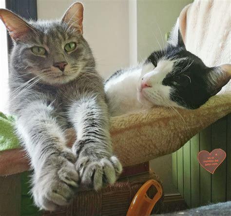 hamacas para gatos 10 trucos para cuidar al gato en invierno camas y cajas