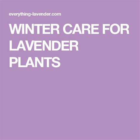 top 28 how to care for lavender bushes best 20