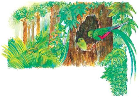 donde los rboles cantan 8467552247 el quetzal
