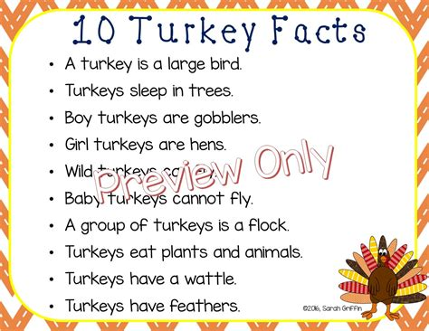10 Facts On by Daughters And Kindergarten Ten Turkey Facts For