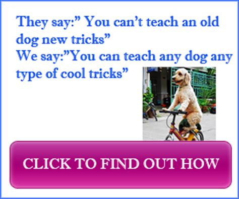 8 Cool Tricks To Teach Your by Tricks To Teach Your Cool Tricks List