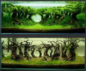 25 best aquascaping ideas on